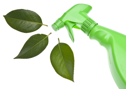 Green Cleaning Services Near Me T5M